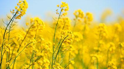 忘忧草是哪种植物的别称-简短介绍